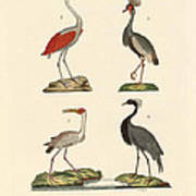 Birds From Hot Countries Poster