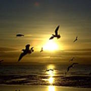 Birds Gathering At Sunset Poster