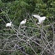 Birds In The Brush Poster