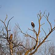Birds Of Prey II Poster