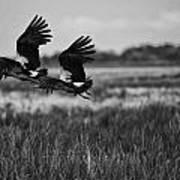 Birds Of The Wetlands V12 Poster