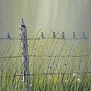 Birds On A Fence Poster