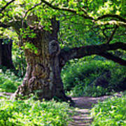 Birnam Wood Scotland Poster