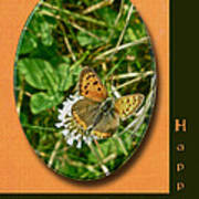 Birthday Greeting Card - American Copper Butterfly Poster
