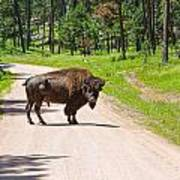 Bison Blocking The Road Poster