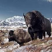 Bison Herd In Winter Poster