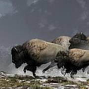 Bison Stampede Poster