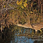 Bittern Stretched Out Poster