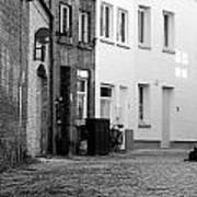 Black Alley Cat Poster