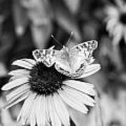 Black And White Butterfly Poster by Debbie Sikes