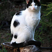 Black And White Cat On Tree Stump Poster