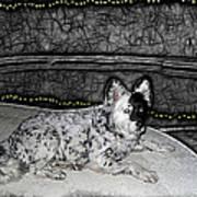 Black And White Dog Poster