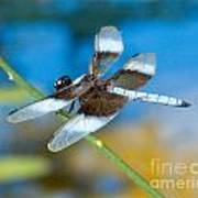 Black And White Dragonfly Poster