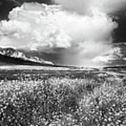 Black And White Meadow Poster