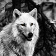 Black And White Painted Wolf Poster