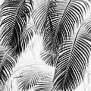 Black And White Palm Fronds Poster by Karon Melillo DeVega
