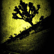 Black And Yellow Joshua Tree Poster Poster