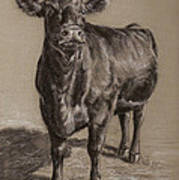 Black Angus Cow 1 Poster