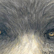 Black Bear Eyes Wildlife Animal Art Poster