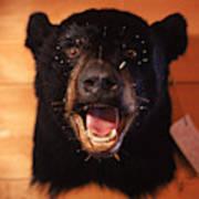 Black Bear Head Poster