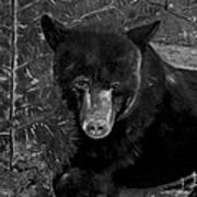 Black Bear - Scruffy - Black And White Cropped Portrait Poster