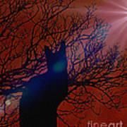 Black Cat In The Moonlight Poster