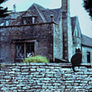 Black Cat On A Stone Wall By House Poster