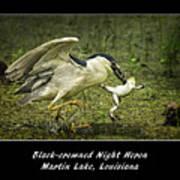 Black-crowned Night Heron At Martin Lake Poster