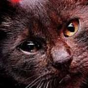 Black Puppy Cat Poster