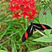 Black Red And White Butterfly Poster