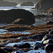 Black Rocks Lichen And Sea  Poster