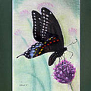 Black Swallowtail Butterfly By George Wood Poster