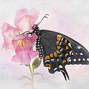 Black Swallowtail Iv Poster