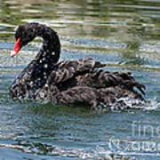 Black Swan 20120706_121a Poster
