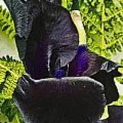 Blackbeard Poster