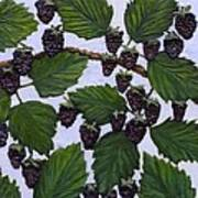 Blackberries Poster