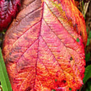 Blackberry Leaf In The Fall 3 Poster