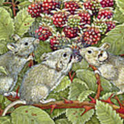 Blackberrying Poster