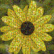 Blackeyed Suzy Mosaic Poster