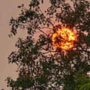 Blazing Sun Hiding Behind A Tree Poster