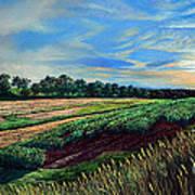 Blazing Sun On Farmland Poster