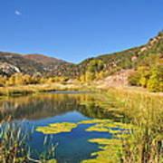 Beauty In Colorado Poster
