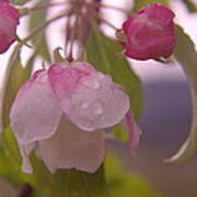 Blomming In The Rain Poster