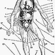 Bloodletting Chart, 1517 Poster