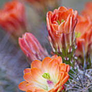 Bloom In Orange Poster