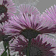Bloom Pink Daisies Enhanced Poster