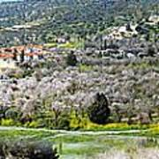 Blooming Almond Trees Poster