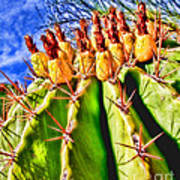 Blooming Barrel Cactus By Diana Sainz Poster