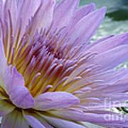 Bloom's Blush Poster