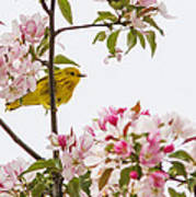 Blossom And Bird Poster